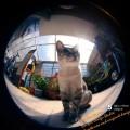 猫眼看世界